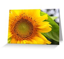 Sunflower iPhone Case Greeting Card
