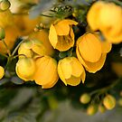 Yellow Bells by TheaShutterbug