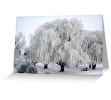 Winter's Frosted Willow  Greeting Card