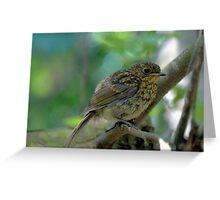 Juvenile Robin Greeting Card