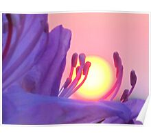 Red Sun at Sunset, Cradled by a Flower Poster