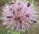Crowded Thistle by lindsycarranza