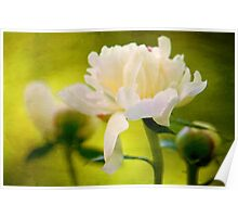 Textured Peony Poster