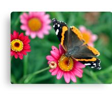 Daisy and the Admiral Canvas Print