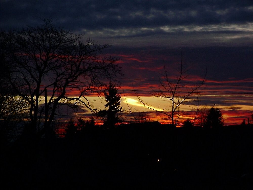 Sunset behind the trees by Courtneystarr