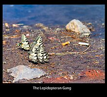 ButterFlies Gone Bad by Nazareth