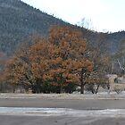 Orroral Autumn by peterhau