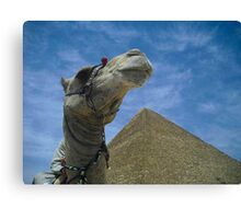 Camel Shot Canvas Print