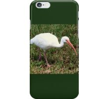 American White Ibis Bird iPhone Case/Skin