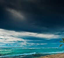 Lone Palm on the Beach by Karen Willshaw
