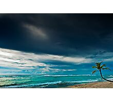 Lone Palm on the Beach Photographic Print