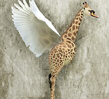 Giraffa Cygnus by Gavin King