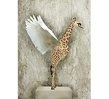 Giraffa Cygnus Photographic Print