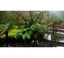 Bridge of green Photographic Print