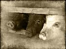 3 little pigs by gruntpig