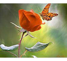 The Flower and the Butterfly Photographic Print