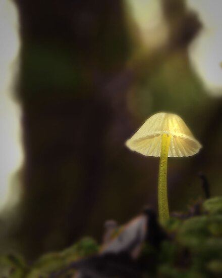 shroom glow by Claire Walsh