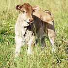 Young Calf by Danielle Espin