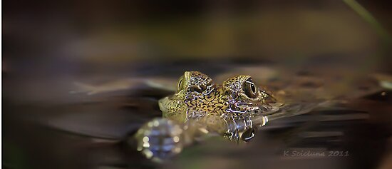 Freshwater croc by bluetaipan