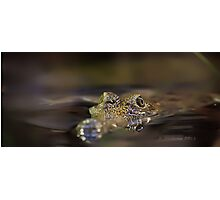 Freshwater croc Photographic Print