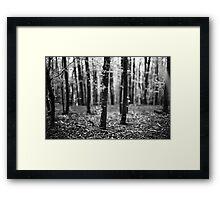 Bokeh, Lindinny Woods, Yair, Scottish Borders  Framed Print