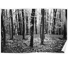 Bokeh, Lindinny Woods, Yair, Scottish Borders  Poster