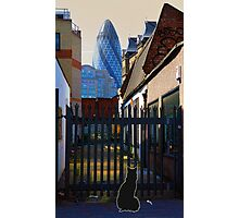 Not the Top Cat Photographic Print