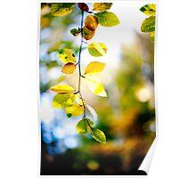 Autumn Leaves, Scottish Borders Poster
