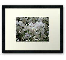 Dogwood Blooms Framed Print