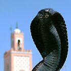 Cobra!  Marrakesh Morocco by Debbie Pinard