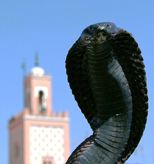 Cobra!  Marrakesh Morocco by Debbie Pinard