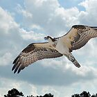 Soaring To The Clouds by Kathy Baccari