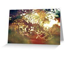 summer light Greeting Card