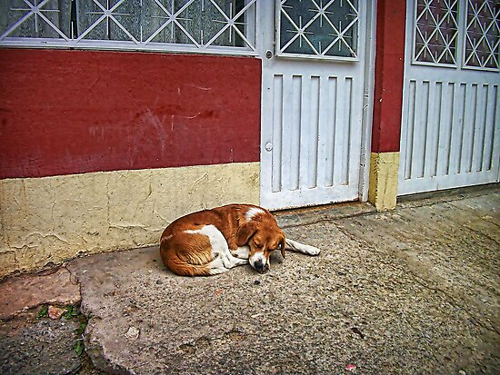 When All Else Fails Take a Nap. by Maria  Gonzalez