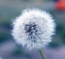 Dandelion by peter Jensen