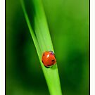 red on green by pascal  desvignes