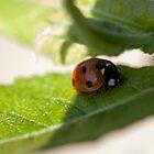 Ladybird by Audrey Clarke