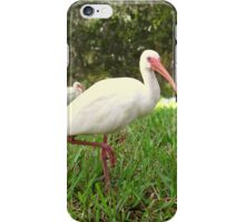 American White Ibis Birds in Orlando, Florida iPhone Case/Skin