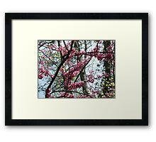 Redbud Tree Framed Print