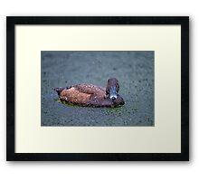 Just ducky! Framed Print