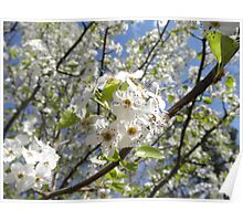 flowering pair tree Poster