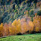 Autumn, Scott's View, Scottish Borders by Iain MacLean