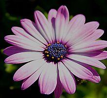 Purple flower 3 by DDowning