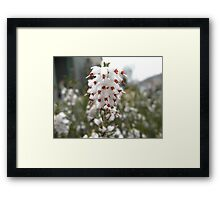 Pretty White Flower Framed Print