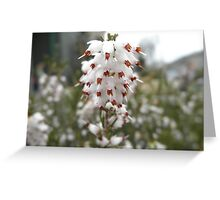 Pretty White Flower Greeting Card
