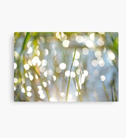 Grass Bokeh Canvas Print