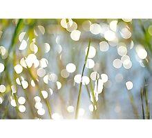 Grass Bokeh Photographic Print