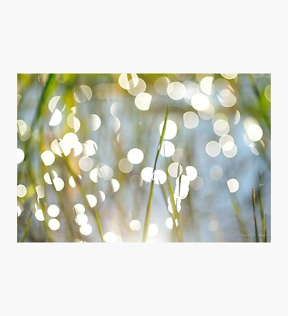 Grass Bokeh Photographic Print
