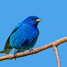 Blue on blue by Daniel  Parent