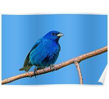 Blue on blue Poster